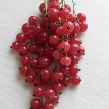 Смородина красная Уральская красавица