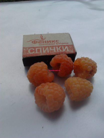 жёлтая малина Ананасная Вигорова купить саженцы