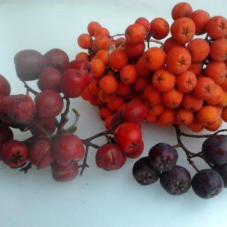 Плодовые деревья саженцы