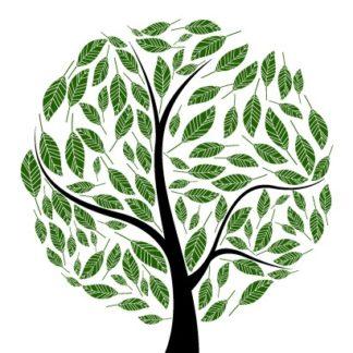 Деревья декоративные саженцы