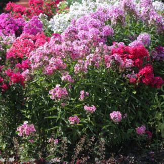 Цветы многолетние (многолетники)